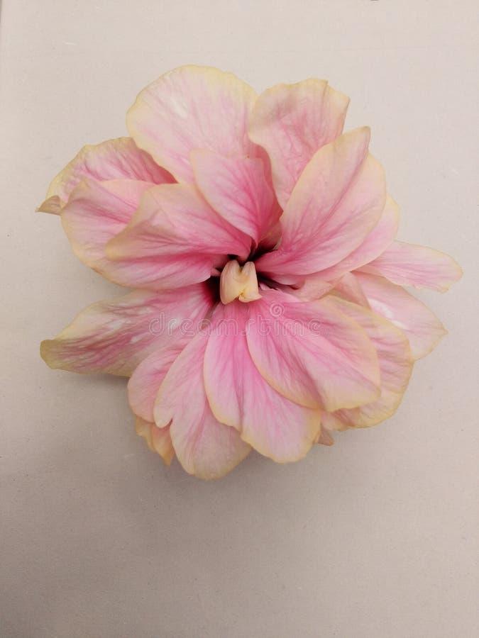 Fleur de chaussure photographie stock