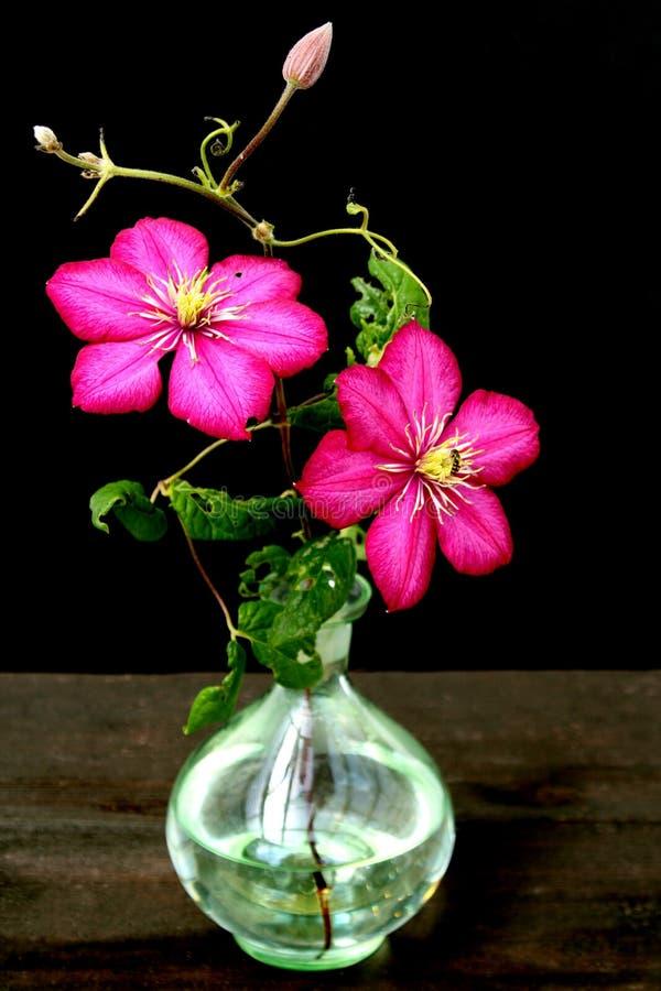 Fleur de Clematis dans le vase images libres de droits