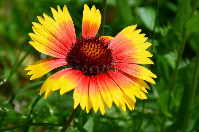 Fleur de contraste photo stock