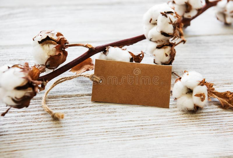 Fleur de coton avec l'?tiquette image stock