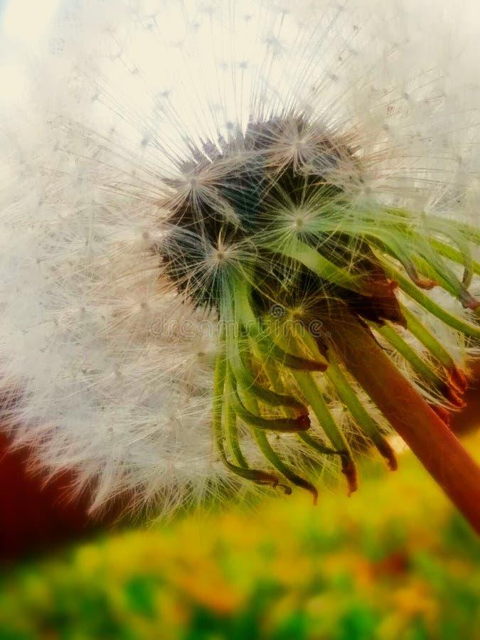 Fleur de coucher du soleil image libre de droits