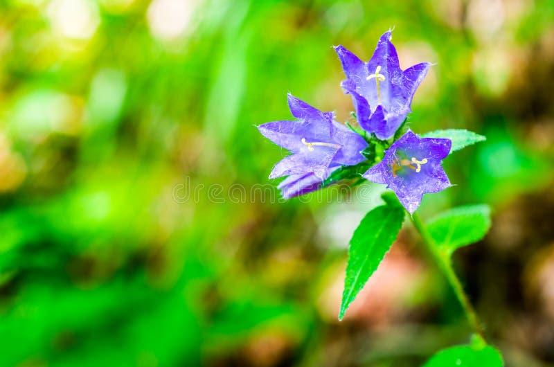 Fleur de couleur violette photo stock