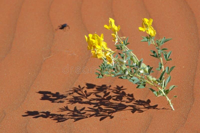 Fleur de désert images libres de droits
