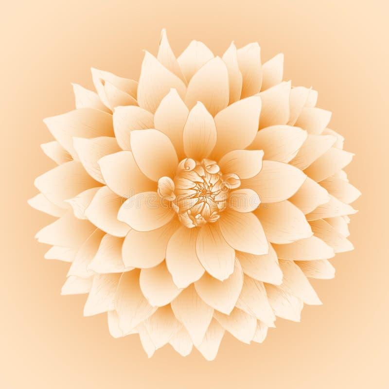 Fleur de dahlia de vecteur. illustration stock