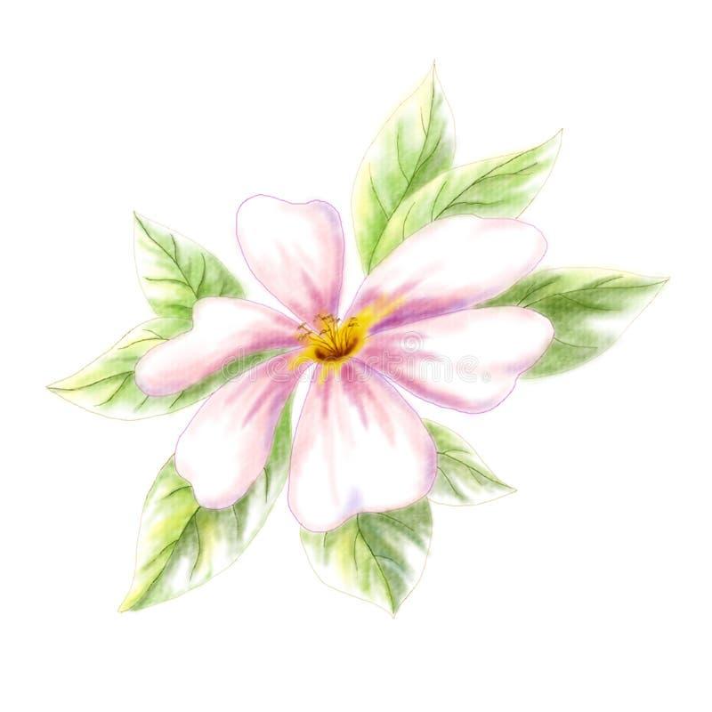 Fleur de Dogrose illustration de vecteur