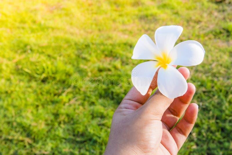 Fleur de feuille dans des mains photo stock