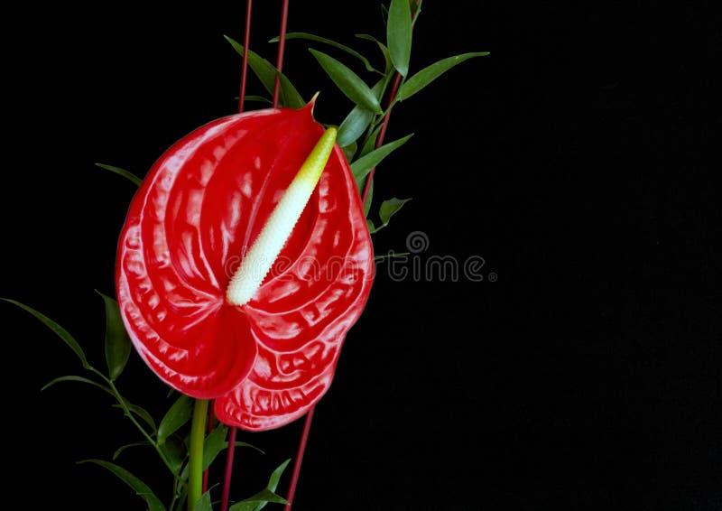 Fleur de flamant rouge, anthure photo stock