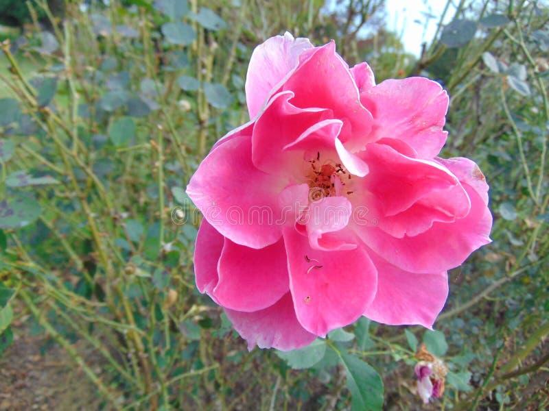 Fleur 2 de fleur photos libres de droits
