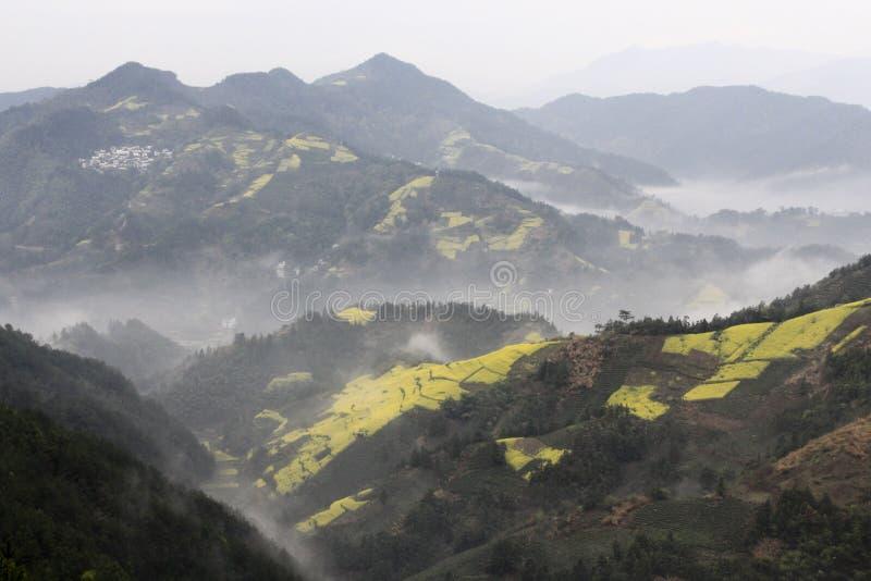 Fleur de fleur de graine de colza en montagnes chinoises photo libre de droits