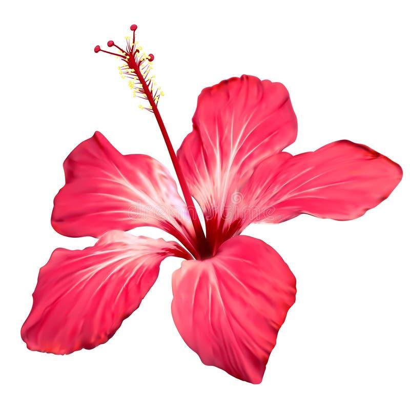 Fleur de fleur de ketmie illustration de vecteur