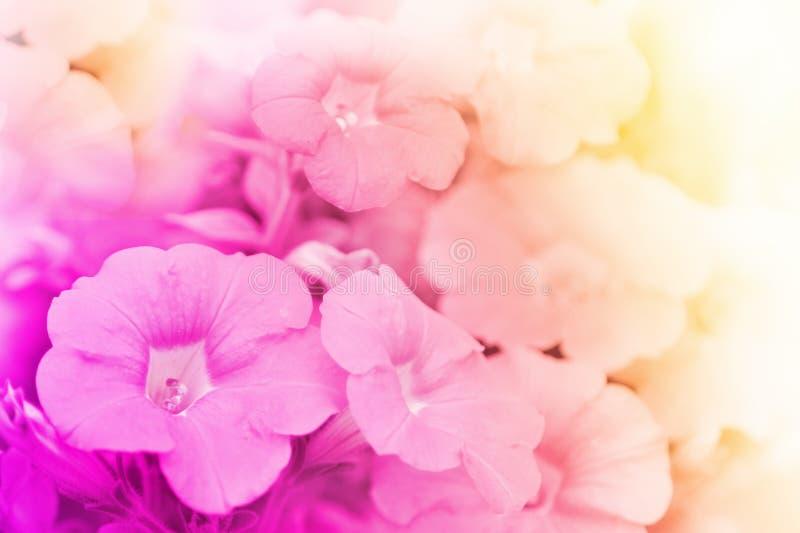 Fleur de fleur sur le fond de tache floue photo stock