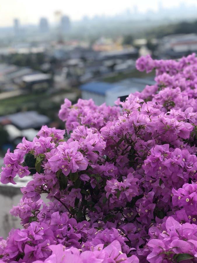 Fleur de floraison images stock