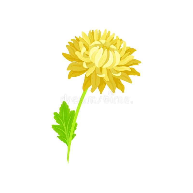 Fleur de floraison luxuriante jaune sur la tige Illustration de vecteur sur le fond blanc illustration stock