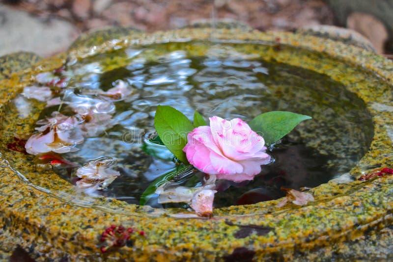Fleur de flottement images libres de droits