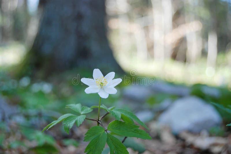 Fleur de forêt image stock