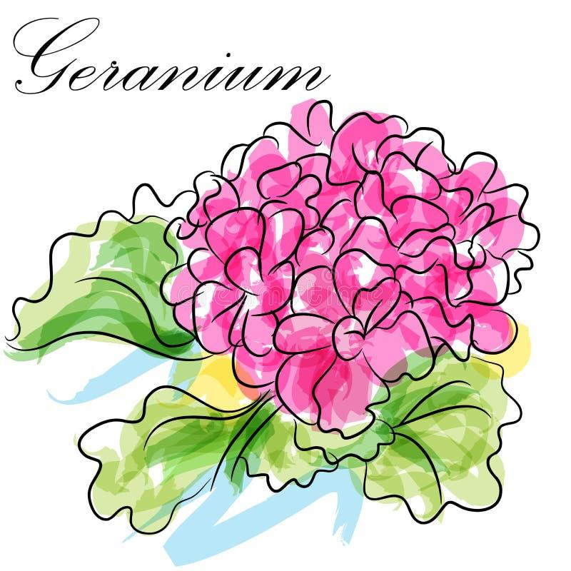 Fleur de géranium illustration libre de droits