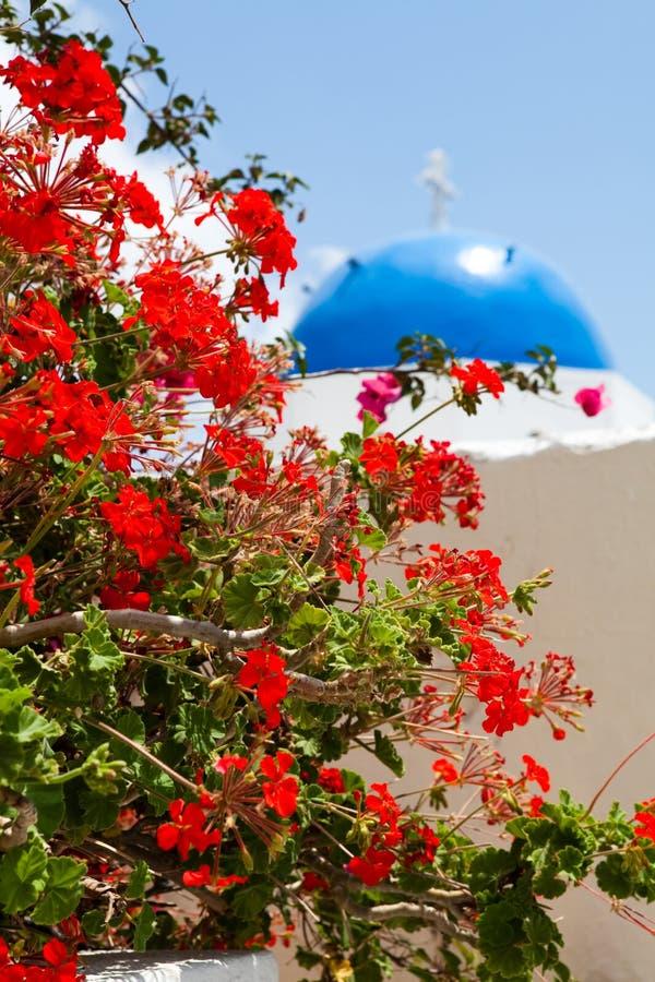 Fleur de géranium dans Santorini photo stock