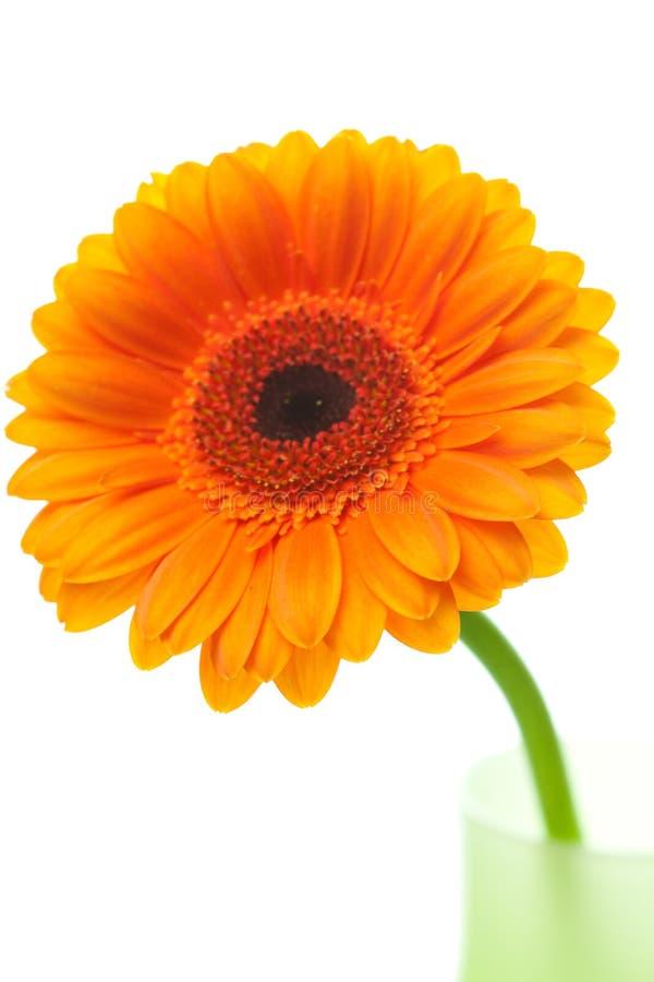 Fleur de Gerbera dans le vase photo libre de droits