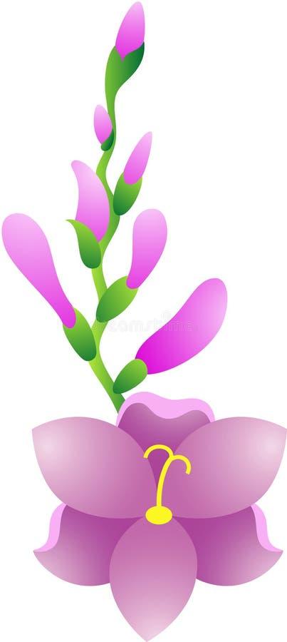 Fleur de Gladiolus illustration stock