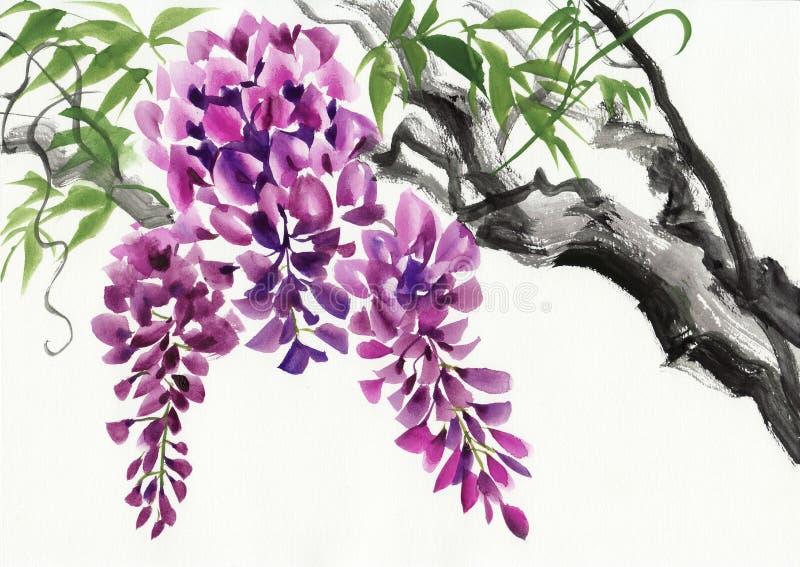 Fleur de glycine illustration stock. Illustration du image - 56522336