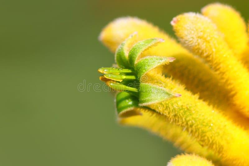 Fleur de fleur de fleur de fleur de fleur de fleur de fleur de fleur de fleur de fleur de fleur de fleur de fleur de fleur de fle photos stock