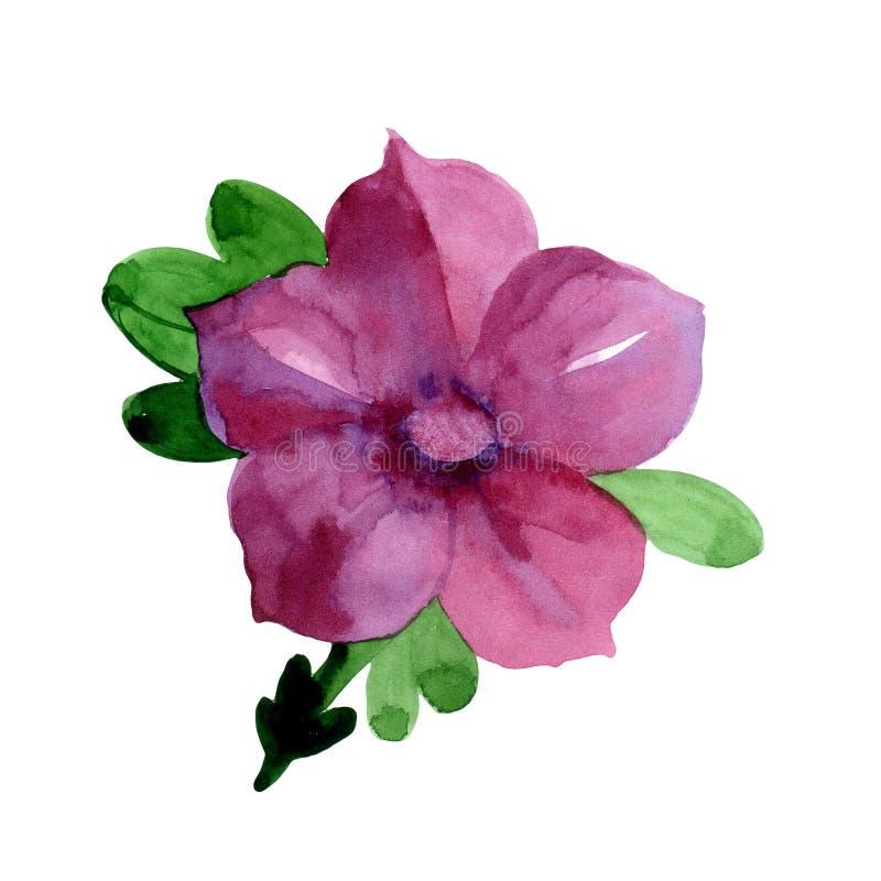 Fleur de jacinthe des bois de Wildflower dans un style d'aquarelle d'isolement illustration stock