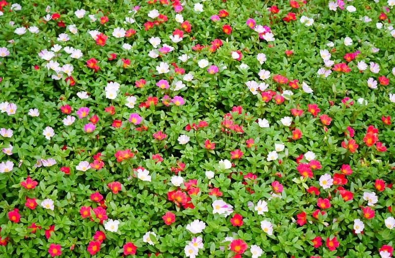 Fleur 2 de jardin images libres de droits
