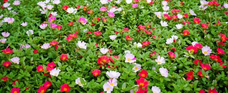 Fleur de jardin images libres de droits