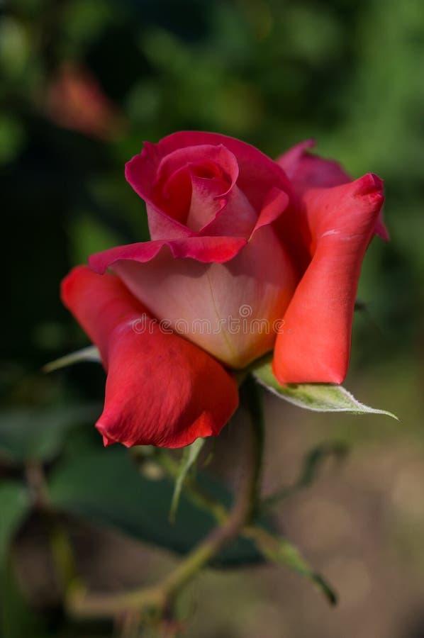 Fleur de jardin images stock