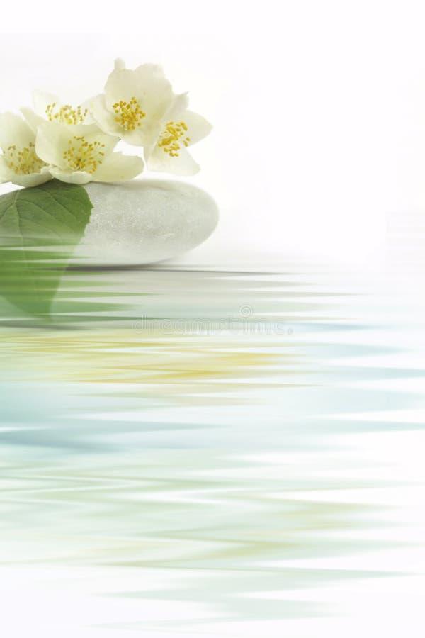 Fleur de jasmin illustration de vecteur