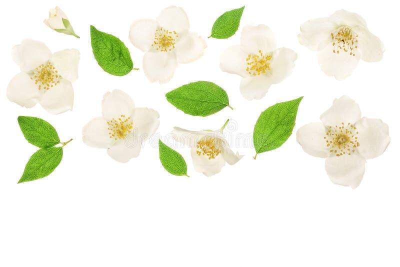 Fleur de jasmin décorée des feuilles de vert d'isolement sur le plan rapproché blanc de fond avec l'espace de copie pour votre te photos libres de droits