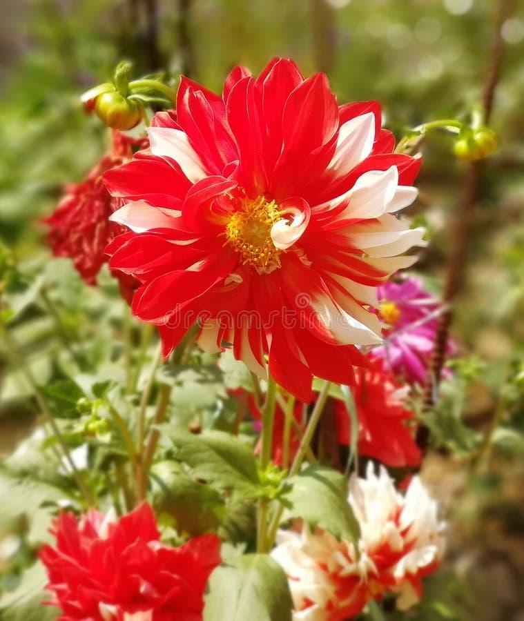 Fleur de joie, amour, paix image stock