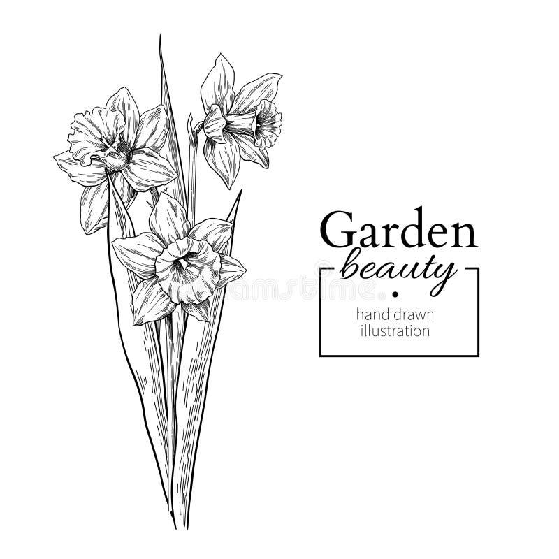Fleur de jonquille et dessin de bouquet de feuilles Ensemble floral gravé tiré par la main de vecteur illustration stock
