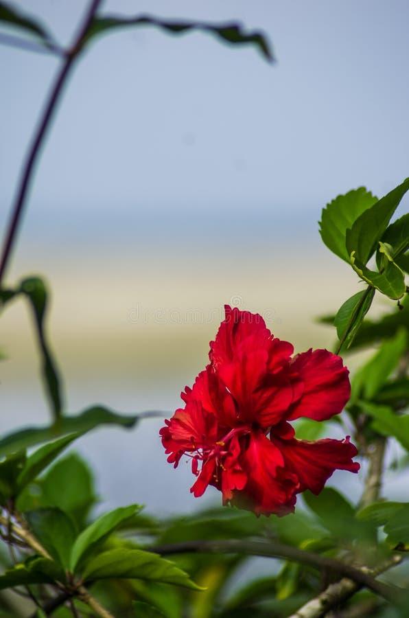 Fleur de jungle et la plage photos libres de droits