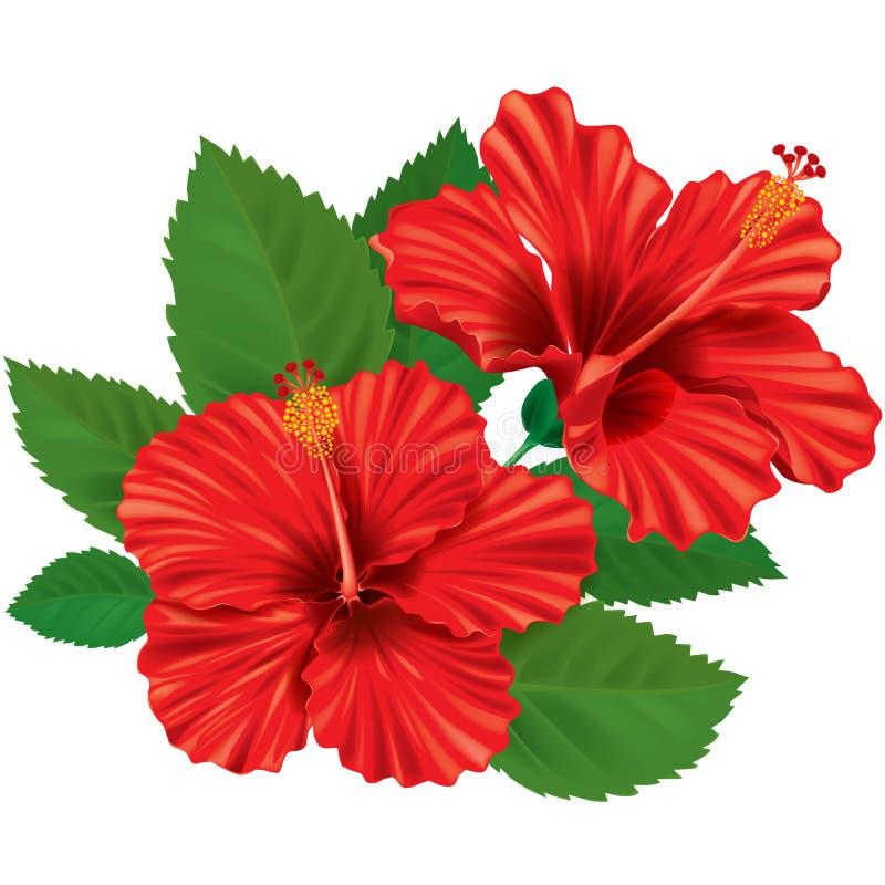 Fleur de ketmie illustration libre de droits
