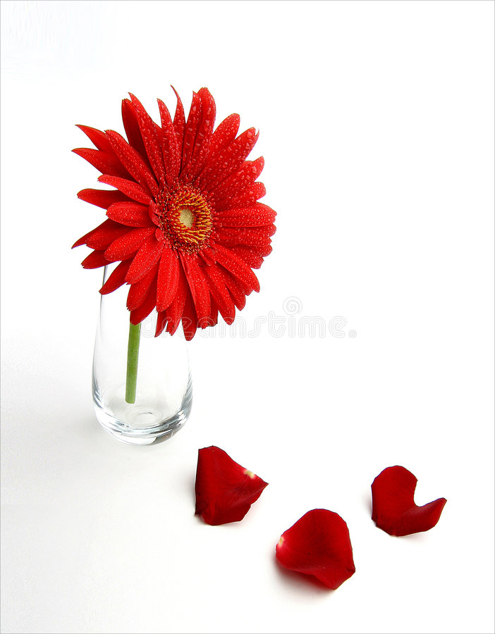 Fleur de l'été image stock