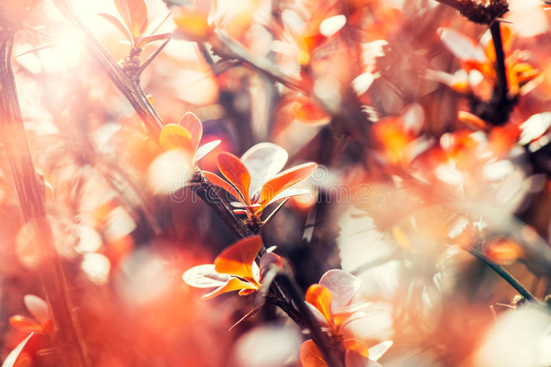 Fleur de l'arbre orange photos stock