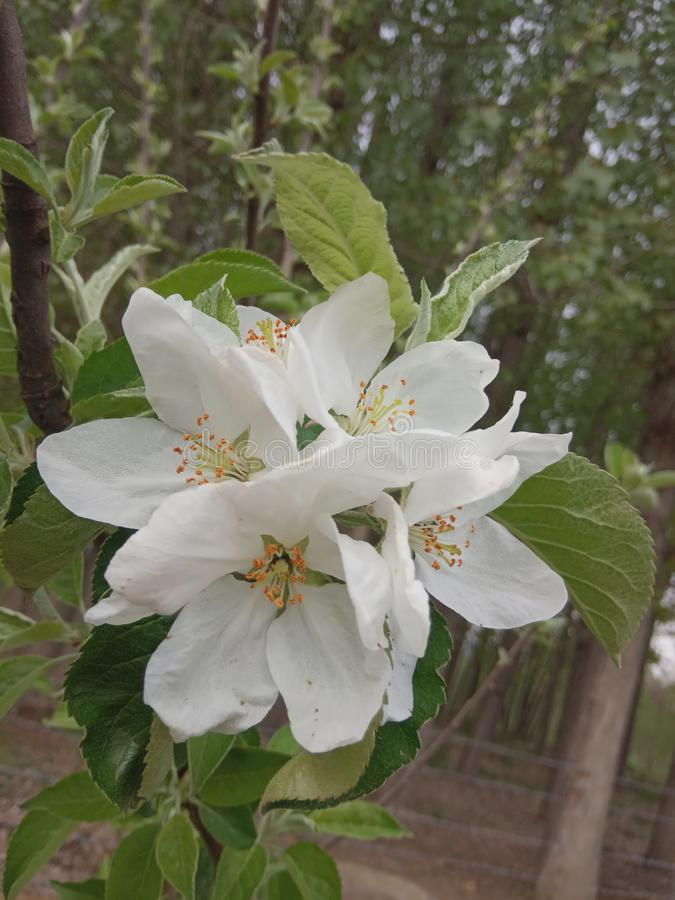 Fleur r photos stock