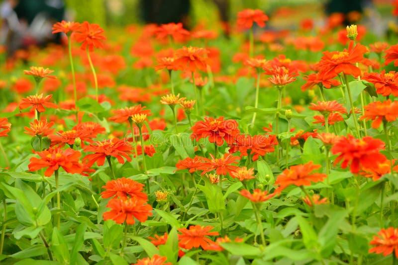 Fleur de la Thaïlande image stock