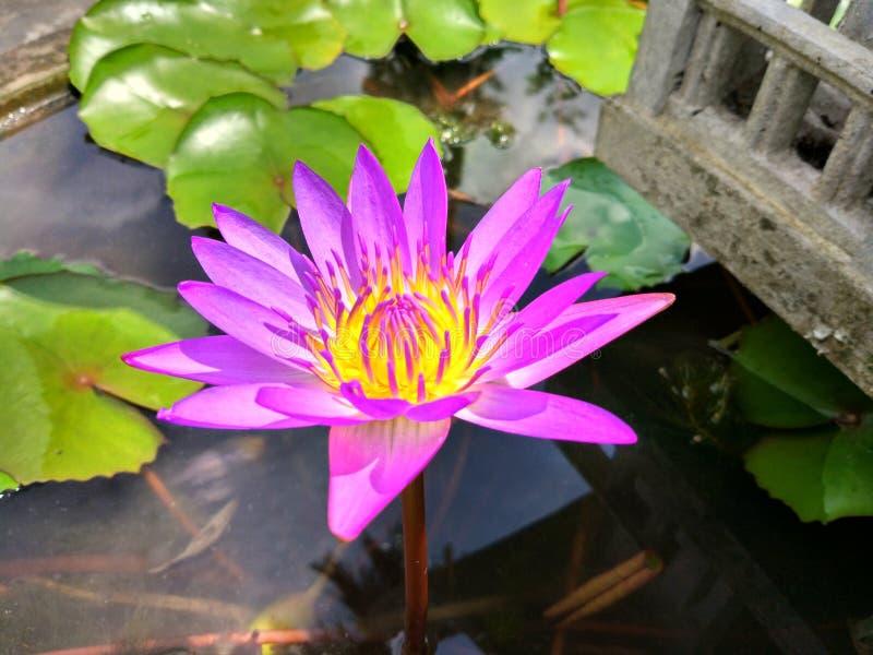 Fleur de lis photos stock