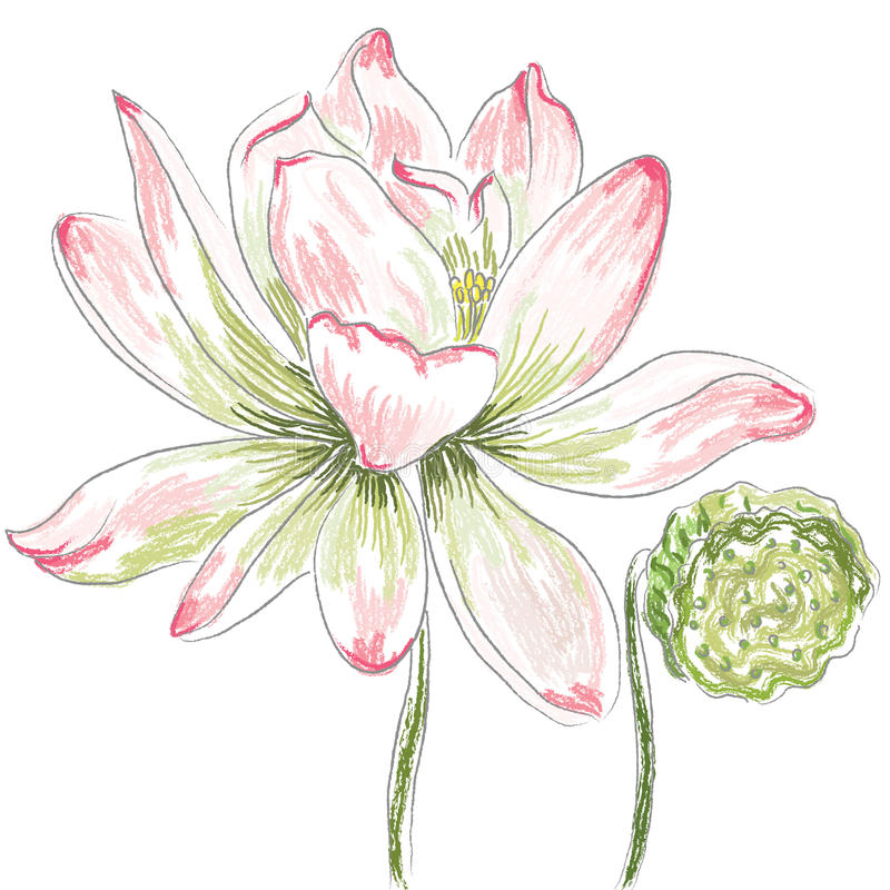 Fleur de lotus illustration libre de droits