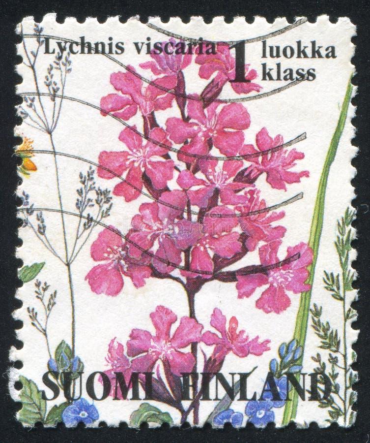 Fleur de Lychnis photographie stock libre de droits