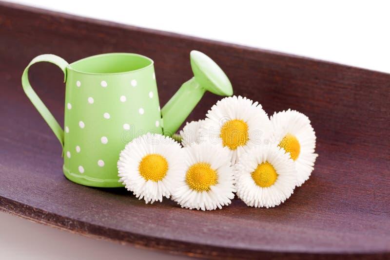 Fleur de marguerite avec le vieux seau de bidon images libres de droits
