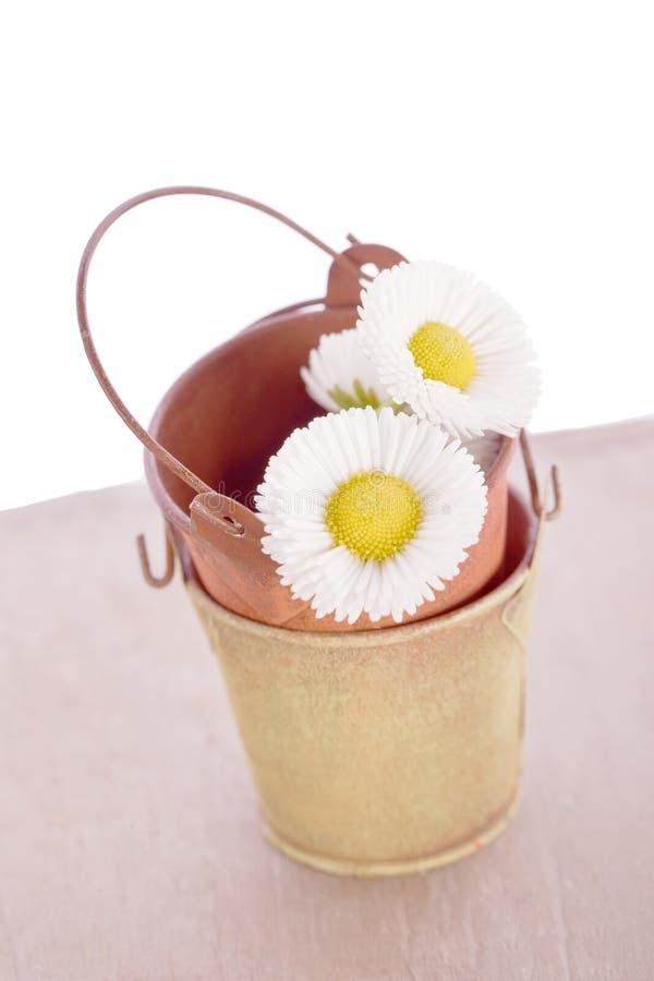 Fleur de marguerite avec le vieux seau de bidon photographie stock libre de droits