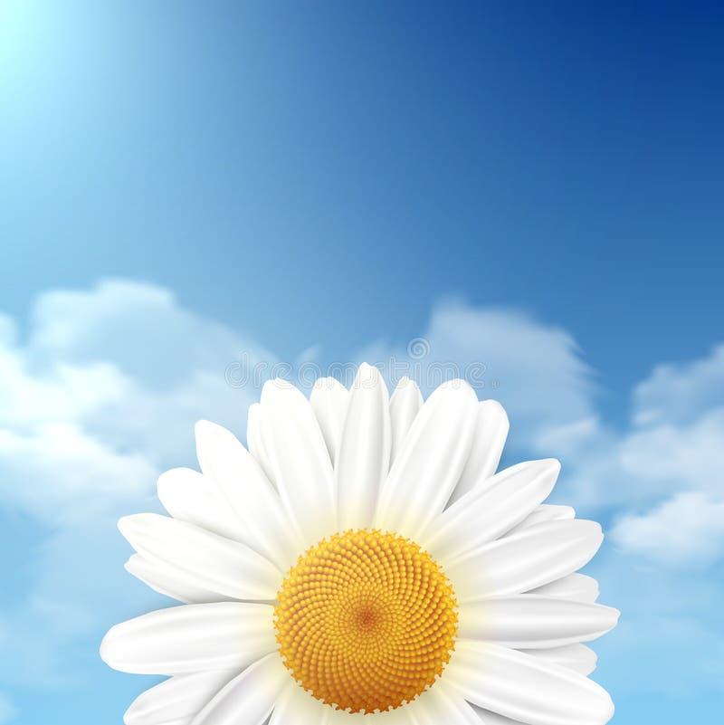 Fleur de marguerite avec un ciel bleu comme fond illustration stock