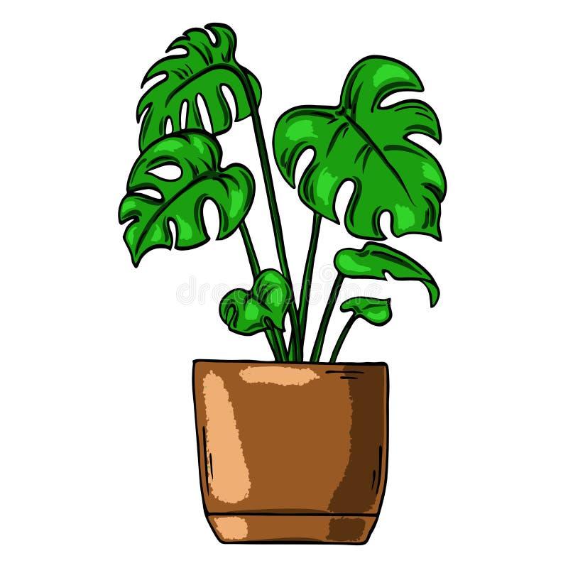Fleur de Monstera dans le pot Illustration tirée par la main de vecteur illustration libre de droits