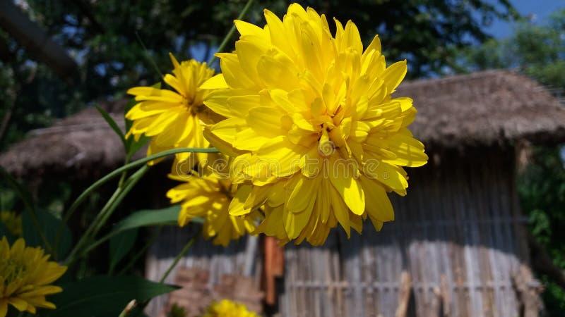 Fleur de nature image libre de droits