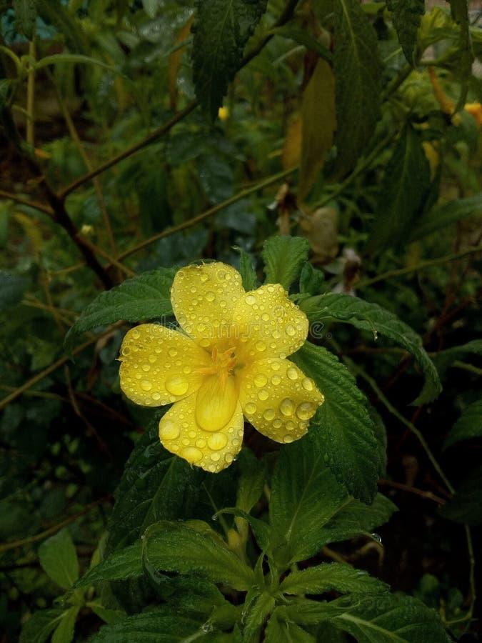 Fleur de nature photographie stock