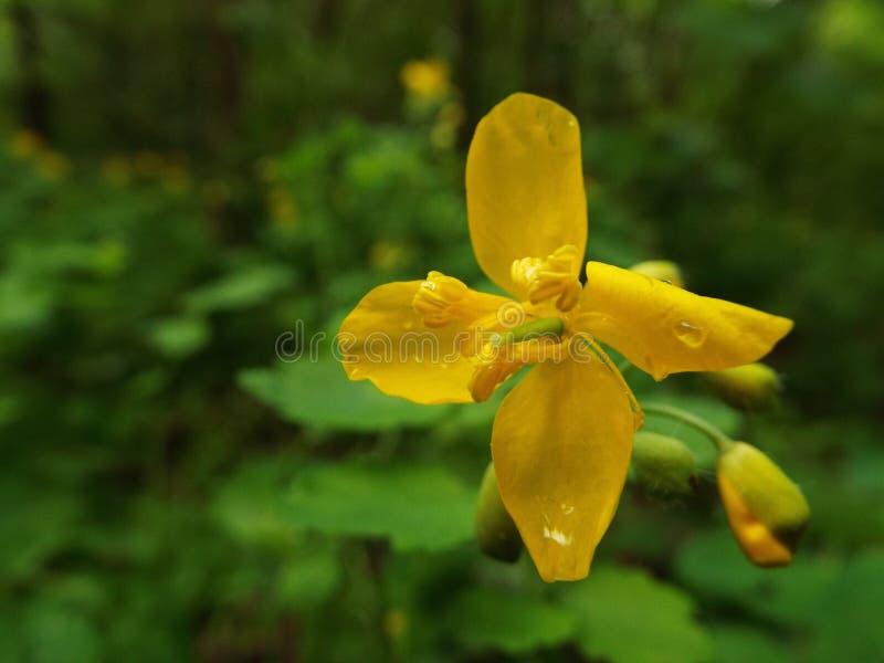 Fleur de nature photo stock