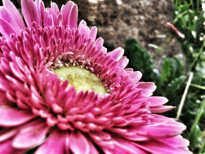 Fleur de nature photographie stock libre de droits